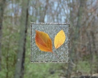 Stained glass leaf terrarium wall art, Autumn leaves, botanical nature inspired, pressed leaves in glass