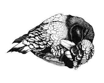 Pigeon - Art Print