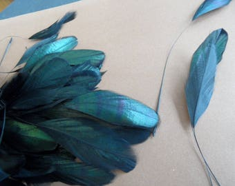 feathers coquetips 2) black swallow, light and original!