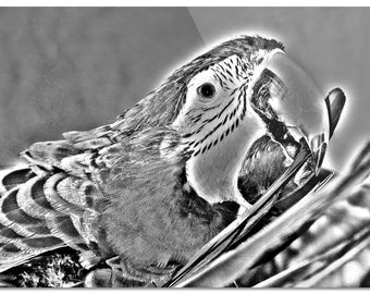 "Black & White Parrot 8""x11"" Glass Cutting Board"