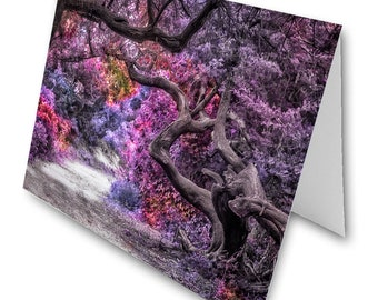 Folded Note Cards - The Magical Forest - Fine Art Photography Gifts