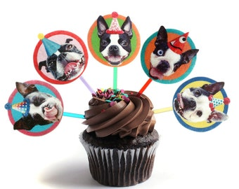 Boston Terrier Dog Cupcake Toppers - set of 6 - party decoration for Bostie lovers
