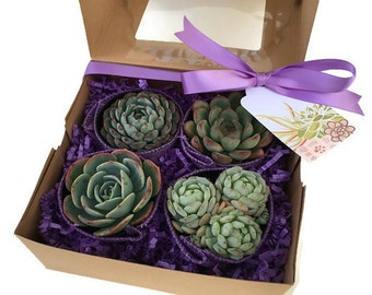 Succulent Gift Box-Gardener gift-Garden in a box-Purple Succulent Gift Box-Thank You Gift-Graduation Gift-Birthday Gift-Trending Gift