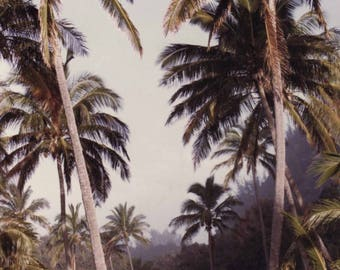 Ke'e Beach Palm Tree Photography by Mario Perez, Print and Matte, Hawaiian Art, Beach Decor, Black and White or Color, Kauai Hawaii