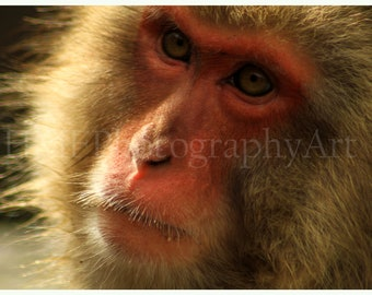 Snow Monkey Photography