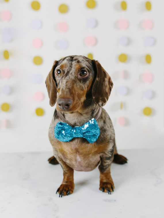 Bowtie for Dog|| Dog Bow Headband || Dog Neck Tie || Pet Bow Tie || Dog Clothes