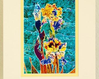 Iris barbus Art photographique emmêlés impression, Iris psychédélique modifié Photo, 5 x 7 Iris Art, tapis de 8 x 10, Torquoise Teal et coloris jaune