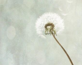 Dandelion Art Print - Gray Blue White Neutral Bokeh Whimsical Wall Art Home Decor Nursery Floral Photograph