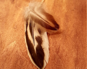 Duck Feathers Cruelty Free Humane Naturally Molted Real Feathers #176