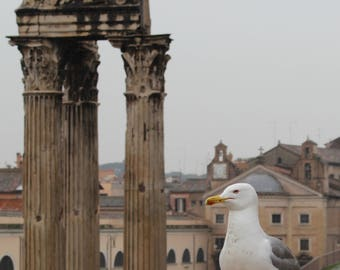 Seagull with Roman Columns