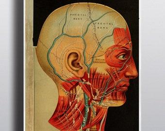 Antique 1800s Anatomy Poster Anatomy Print Science Chart Human Head Print Vintage Anatomy Human Body Antique Medical Wall Decor Old Print