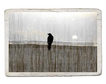 Bird Silhouette Gray Neutral Decor Vintage Style Landscape Photograph Crow Raven Sun Moon