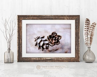 Two Pinecones in Snow Photo, Natural Home Décor Print, Grey and Brown Pinecones, Warm Autumn Pine Cone Photograph, Cabin Decor