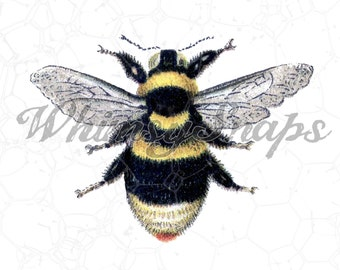 Awesome Vintage Bumble Bee  DIGITAL IMAGE Download,  .png and .jpeg, transfer to burlap, totes, designs, collages and more