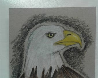 Bald Eagle Colored Pencil Drawing Art