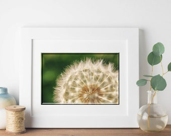Dandelion Photograph-Fine Art Photography-Horizontal Wall Art-8x10/11x14/16x20/20x30-Dandelion Seeds-Close Up-Macro Photography-Nature Print
