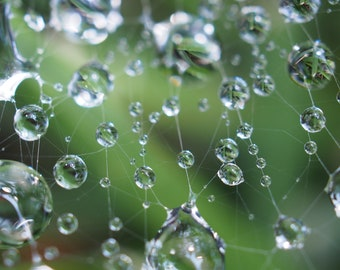 Rainwater on a spider web