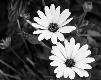 Black and White Flower Photo.