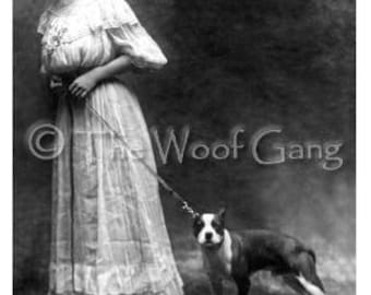 Boston Terrier and an American Beauty, c. 1912 Vintage Photo - Note Card