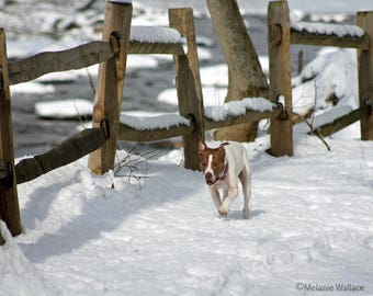 A dog enjoying the snow