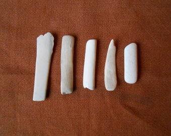 Surf tumbled bones, beach finds, collectible, crafting, supplies, 5 pieces  ( C22 )