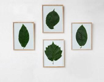 Botanical Print Set of 4, Greenery Print, Green Leaf Wall Art Prints, Botanical Printable Art, Nature Photography DIGITAL DOWNLOAD Art, 8x10