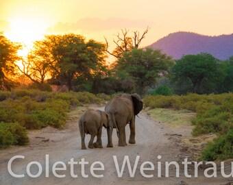 Elephants Walking Into The Sunset photo, Kenya, Africa. Canvas Print.