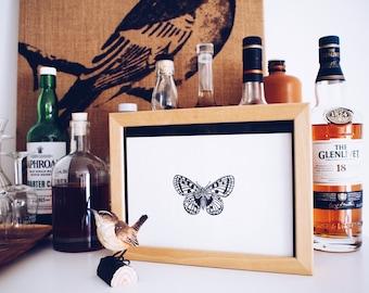 Parnassius Apollo Butterfly - Original Handprint