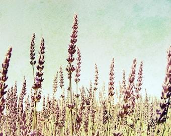 "Botanical Photograph - Lavender Field Print - Rustic Farmhouse -  Gift For Her - Mauve Purple Wall Art - Nature Photography  ""Lavandula"""