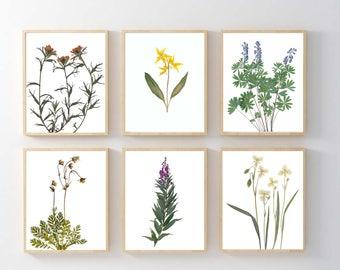 Set Of 6 Pressed Flowers Botanical Prints   Mountain Wildflowers Botanical  Print Set   Nature Wall
