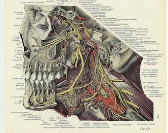 Skull art - teeth vintage poster