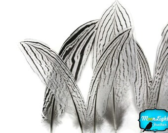 """Tail Feathers, 10 Pieces - 4-6"""" NATURAL SILVER Tail pheasant feathers : 4228"""