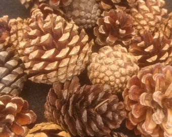 Small Box Of Pinecones