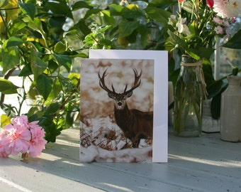 Stag in Winter - A6 Blank greetings cards of a stag drawn by Imogen Man