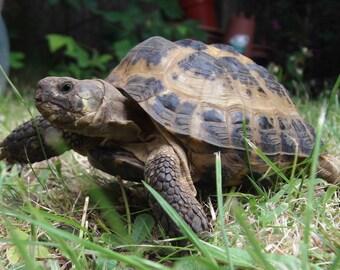 Tortoise, photography, animal photography, poster