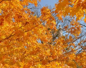 Fall Autumn trees