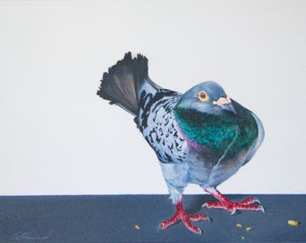 Phillip, original painting of a pigeon acrylic on canvas