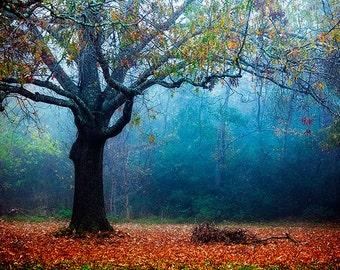 Colorful Tree Photography, Landscape, Autumn Foliage, Nature  Fog Photography, Fall Decor, Autumn Photo, Colorful Tree, Vibrant Decor