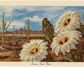 Arizona State Flower - Saguaro Cactus Blossom Vintage Postcard Signed Artist Ken Haag (unused)