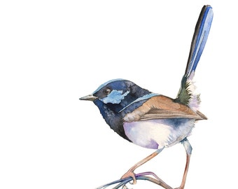 Fairy Wren print, Fairy wren watercolour painting, Fairy wren painting, Australian bird art, FW15916, A3 size, bird watercolor painting