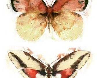 Moths and Butterflies Giclee Print