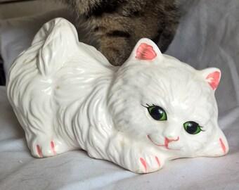 Avalo Sanctuary's Playful Kitten