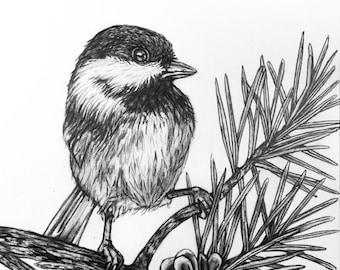 Chickadee bird pencil drawing - 79