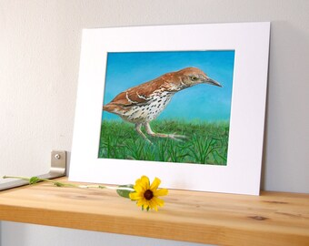 14x11 Brown Thrasher Bird Wall Art with White Mat - Ready to Frame Bird Print from Original Acrylic Painting