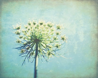 "Botanical print, queen annes lace photograph,  pastel blue wall art, flower print, rustic wildflower print, bedroom wall art ""True Blue"""