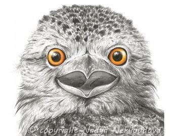 Tawny Frogmouth - 8x8 inches (20x20cm) Art Print - Not an Owl - Australian wildlife art, watercolour print, woodland bird, nature decor
