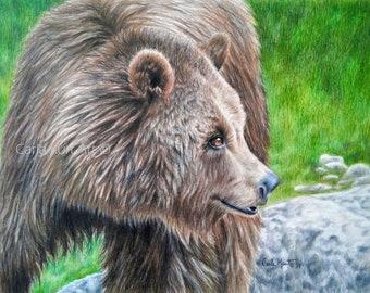 Bear art BROWN BEAR by Carla Kurt signed Print 11 x 14 grizzly bear wildlife art best artist top selling art