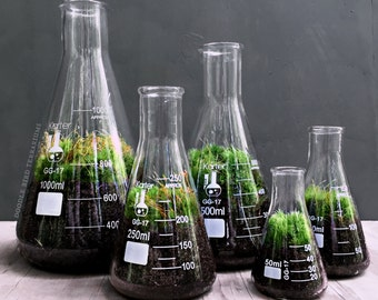 Chemistry Terrarium Gift Set with Indoor Plants in Glass Science Flasks