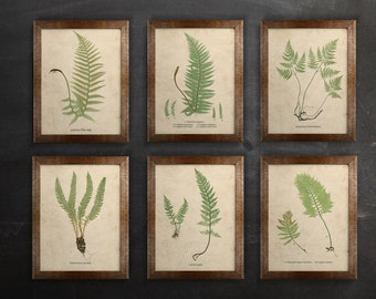 "Antique Botanical Print Set - 8,5"" x 11"" - Fern Print Set - digital download - science art"