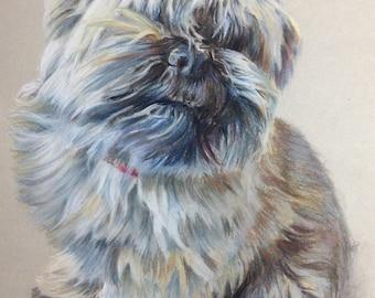 Portrait of dog in pastel